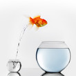 Gold fish jumping to big fishbowl - 81283179