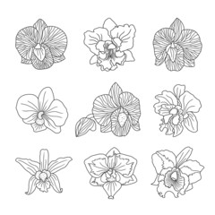 orchid flowers . Vector illustration.