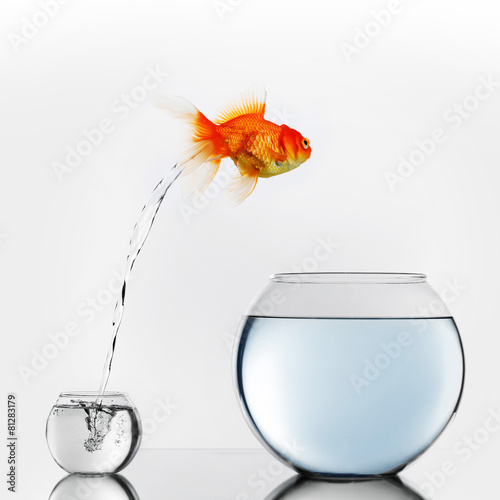 canvas print picture Gold fish jumping to big fishbowl