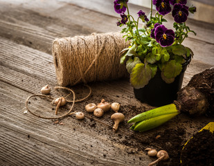 Plants for planting and garden accessories