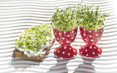fresh cress in egg cup and whole corn bread