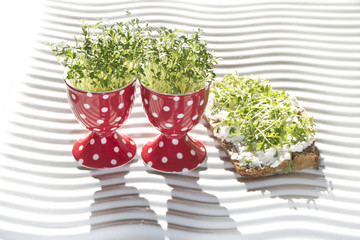 "fresh cress  in egg cup ""lepidium sativum"""