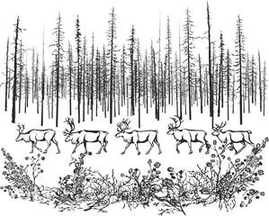 Deer in the northern taiga.