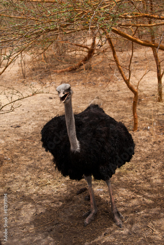 Keuken foto achterwand Struisvogel ostrich