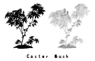 Castor Plant Contours, Silhouette and Inscriptions