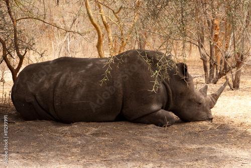 Tuinposter Neushoorn rhino