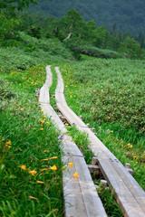 栂池高原の風景