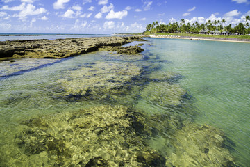 Barrier reef in Porto de Galinhas, Recife, Pernambuco - Brazil