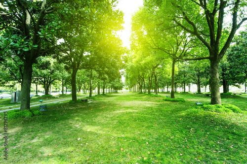 Fotobehang Bomen footpath and trees in park