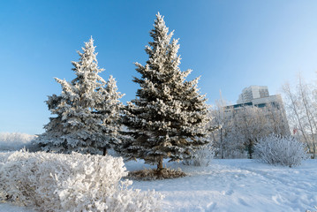 Snow-covered trees in the city of   Moscow, Russia