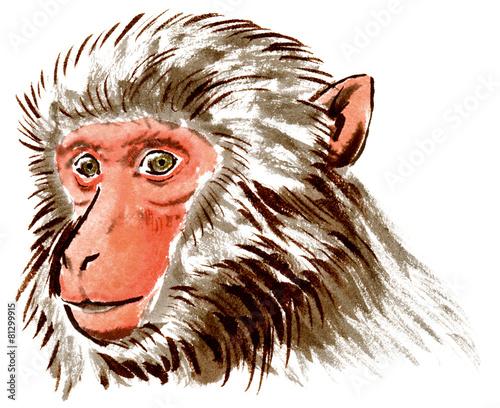 無料 2015 年賀 素材 無料 : イラスト: 猿のリアルな斜め顔 ...
