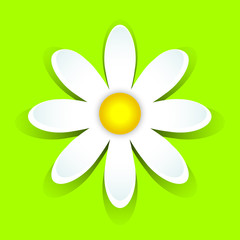 3D-daisy on green