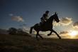 Equus ferus caballus - Horse - 81303108