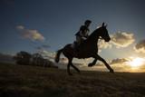 Equus ferus caballus - Horse