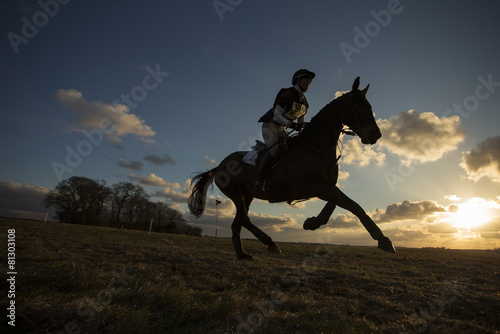 Tuinposter Paardensport Equus ferus caballus - Horse