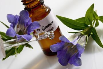 Enzian (Gentiana clusii), Gentian, Stockbottle