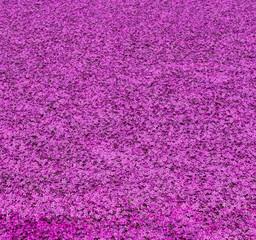 Pink moss at Fuji Shibazakura Festival