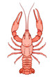 Decorative isolated crayfish - 81306144