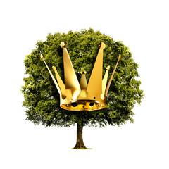 Eiche mit Krone