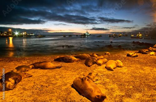Leinwanddruck Bild Beautiful sea lions sleeping along the port in San Cristobal