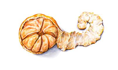 Ripe watercolor peeled tangerine. Handwork. Tropical fruit