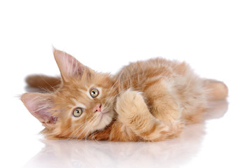 Fluffy playful ginger kitten lying on a white background