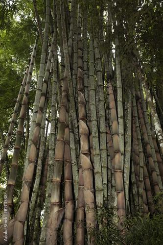 In de dag Bamboo Bambú.