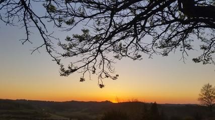 Germogli al tramonto