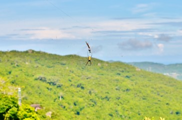 Banana spider on a web on a background of hills in China