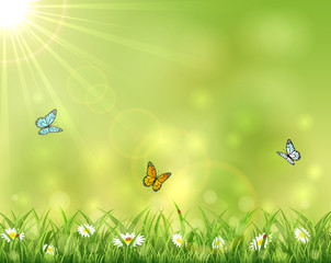 Sunny background with three butterflies
