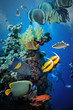 Tropical Fish and Coral Reef - 81316505