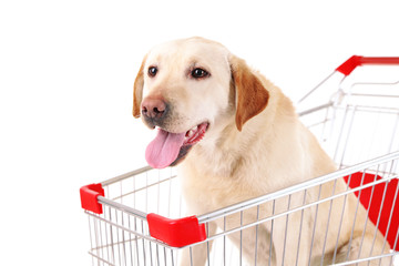 Dog in shopping cart isolated on white