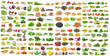 set of vegetable on white background - 81323726