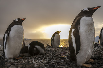 Papuas sunset in O'Higgins base, Antarctic.