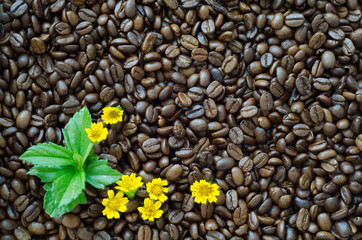 Roasted coffee beans background and yellow flower