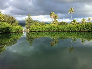 Reflection of coconut trees in Hawaiian fish pond