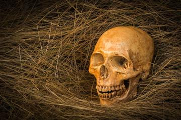 skull and nature