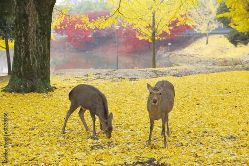 大仏池畔 鹿と銀杏の絨毯