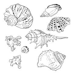 Set of vector hand drawn seashells