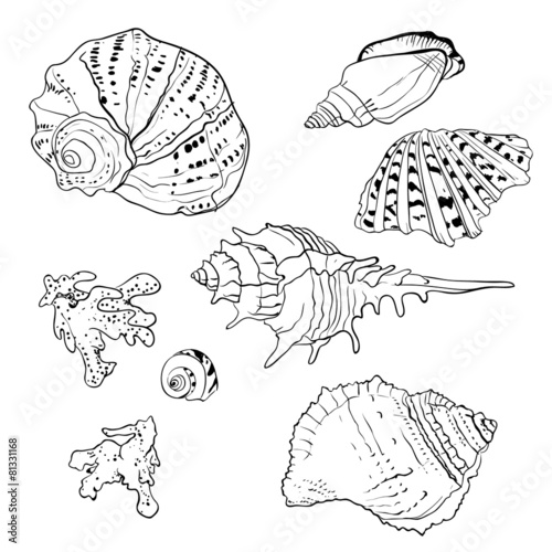 Set of vector hand drawn seashells - 81331168