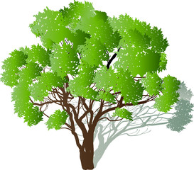 green tree with many branches and shadow