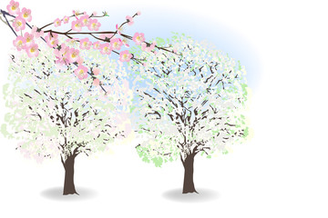 pink and white spring blossoming trees on light background