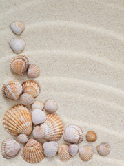 Composition of seashells on the sand