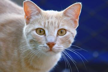 Lo sguardo di un gatto