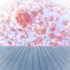perspective blue wood over blurred, blooming trees, product