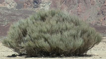 plante du désert