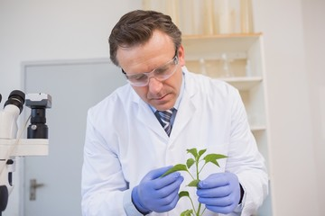 Scientist examining plants