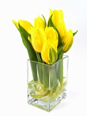 Bright flowering spring tulips on a vase