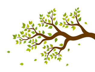 Vector illustration of tree branch with green leaves
