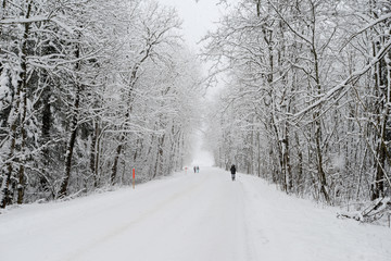 Snowy landscape in Engelberg